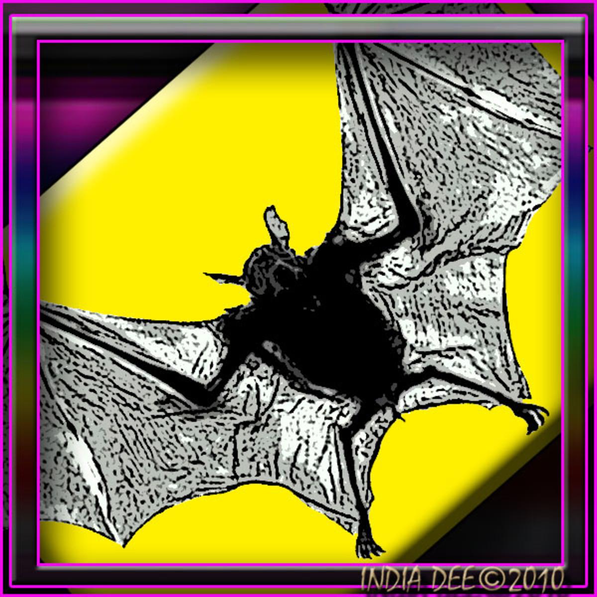 bats-weird-animals