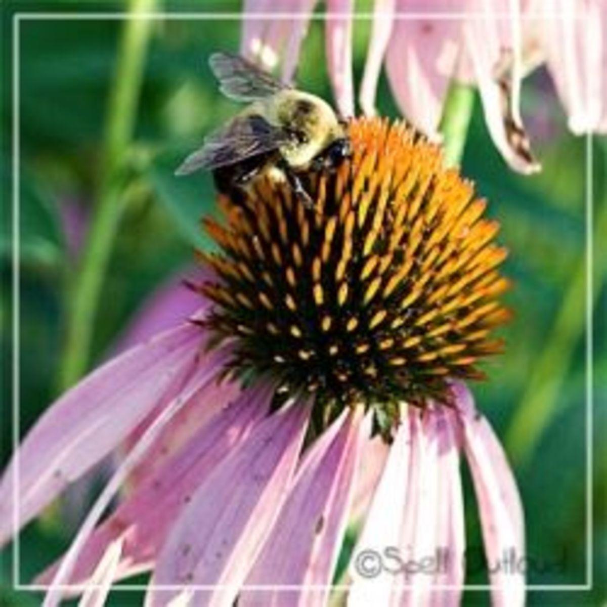 Bees: Preschool Theme Unit