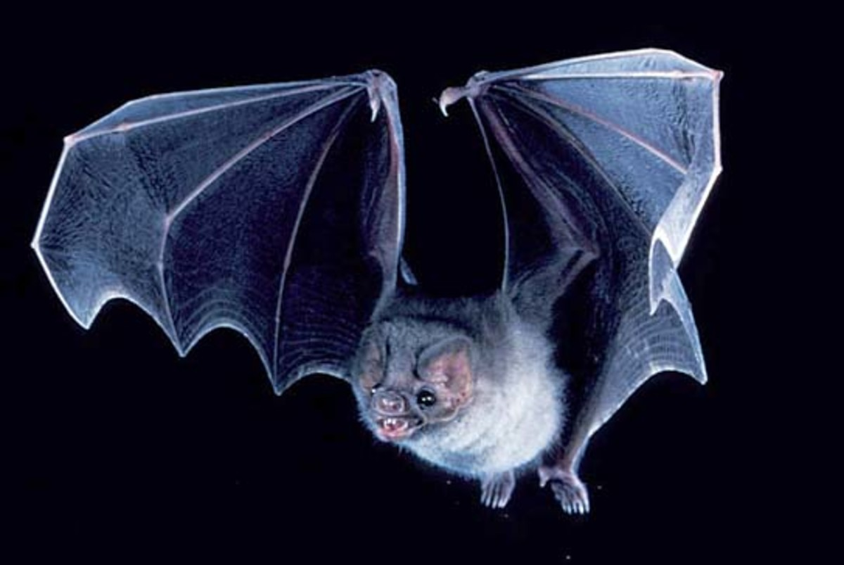 bats-that-bite