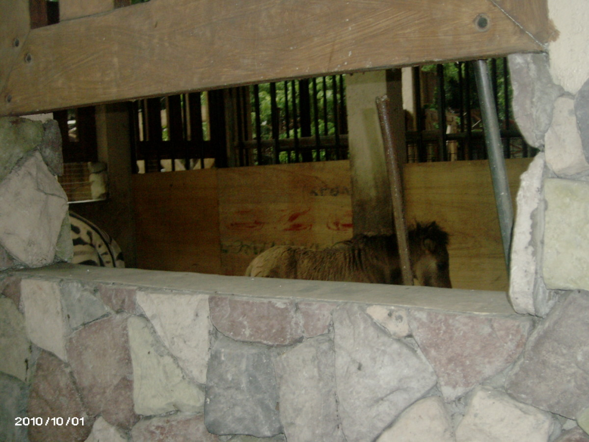 the new enclouse that used to house the giraffe,  eating inside the quarter are Zebra and a Mini horse