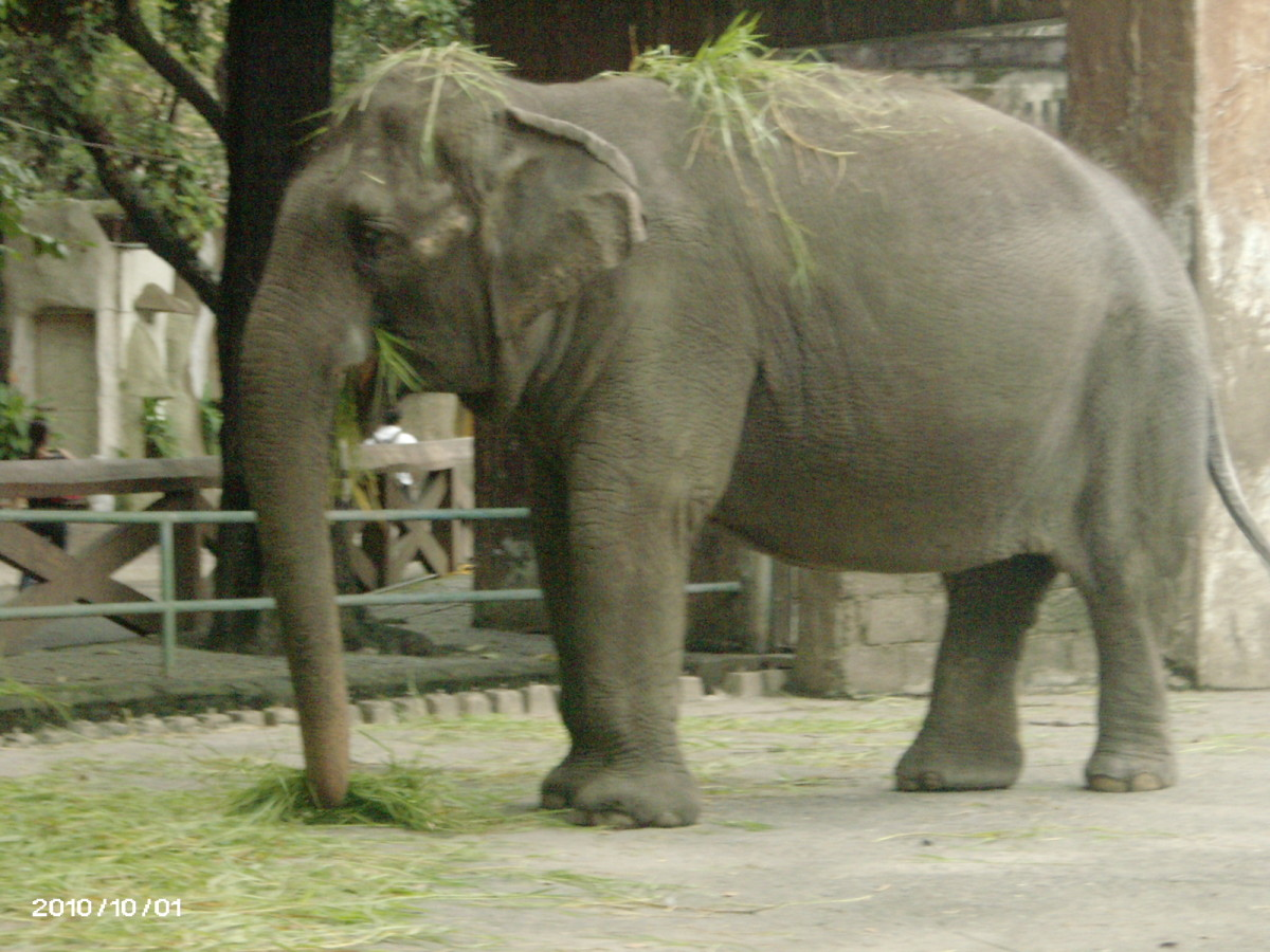 Manila Zoo, the oldest zoo in Asia