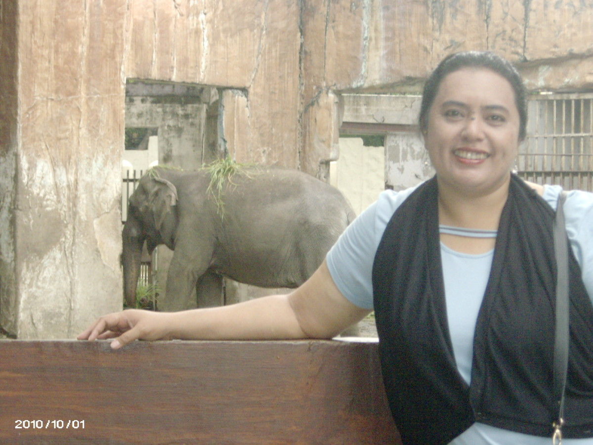 manila zoo background Manila, philippines 'trivia king' kim atienza born an aquarian by boy villasanta, abs-cbnnewscom until his house appeared as a mini zoo, he later donated his collection to the manila zoo but also retained and procured other pets.