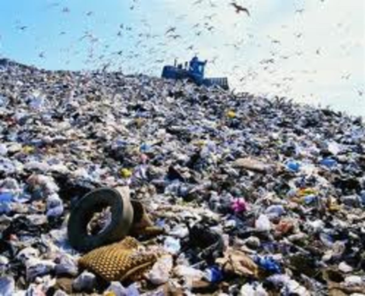 As land fills continue to grow, recycling green waste into vermicompost has proven effective.