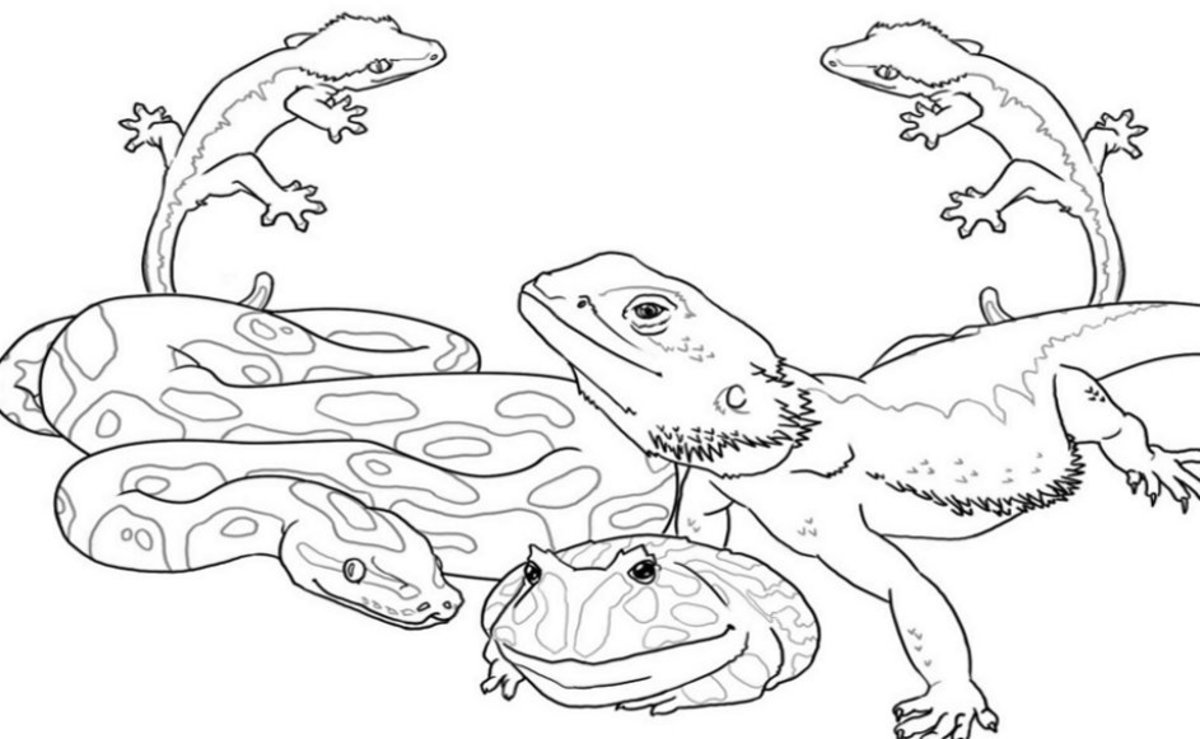 Kids Wild Animals Coloring Pages - Reptiles