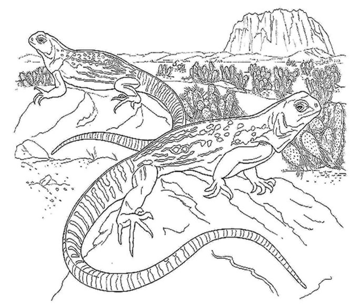 Kids Wild Animals Coloring Pages - Desert Lizards