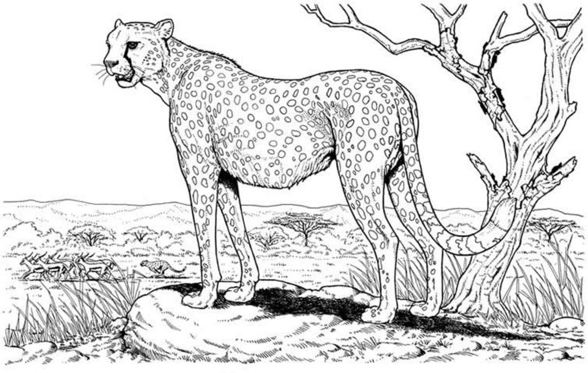 Kids Wild Animals Coloring Pages - Cheetah