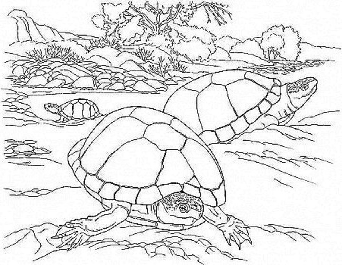 Kids Wild Animals Coloring Pages - Desert Dry Land Turtles