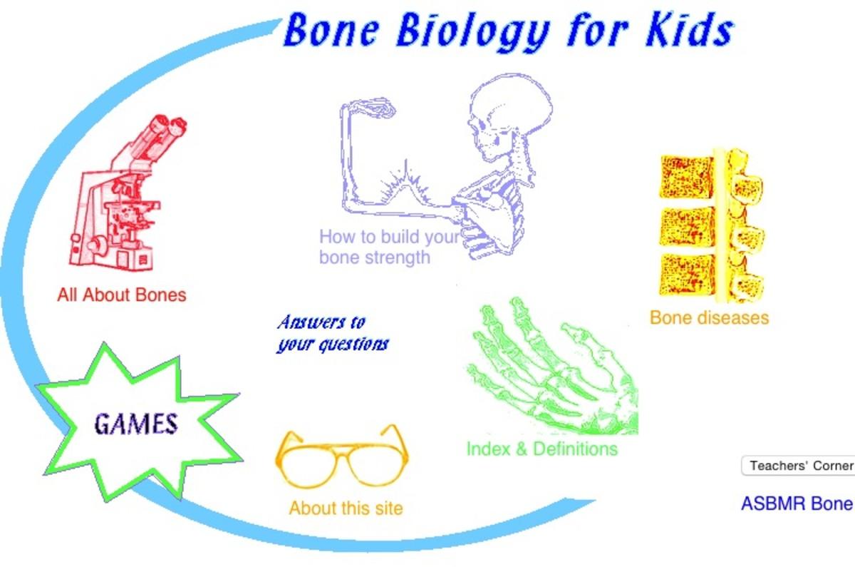 human-anatomy-kids