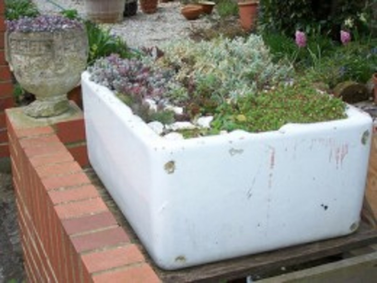 Outdoor Trough Sink : Miniature Garden: How to Plant Trough and Sink Gardens?