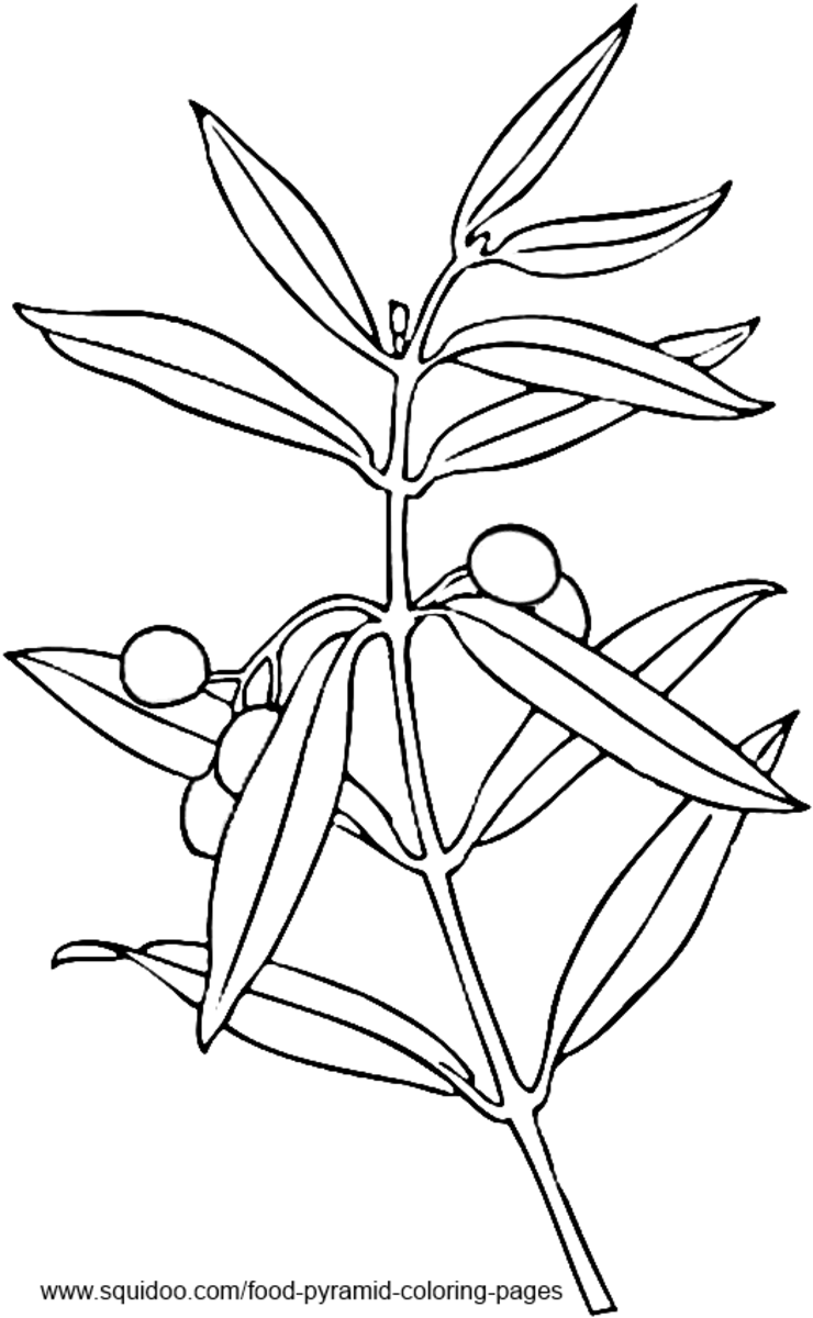 Olive Tree Coloring Pages