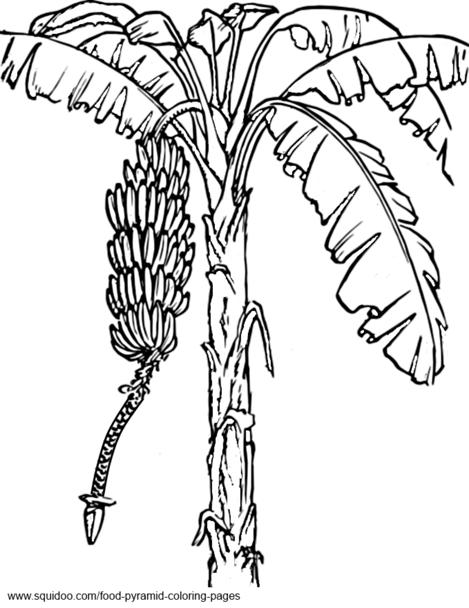 fruit tree coloring page - food pyramid coloring pages hubpages