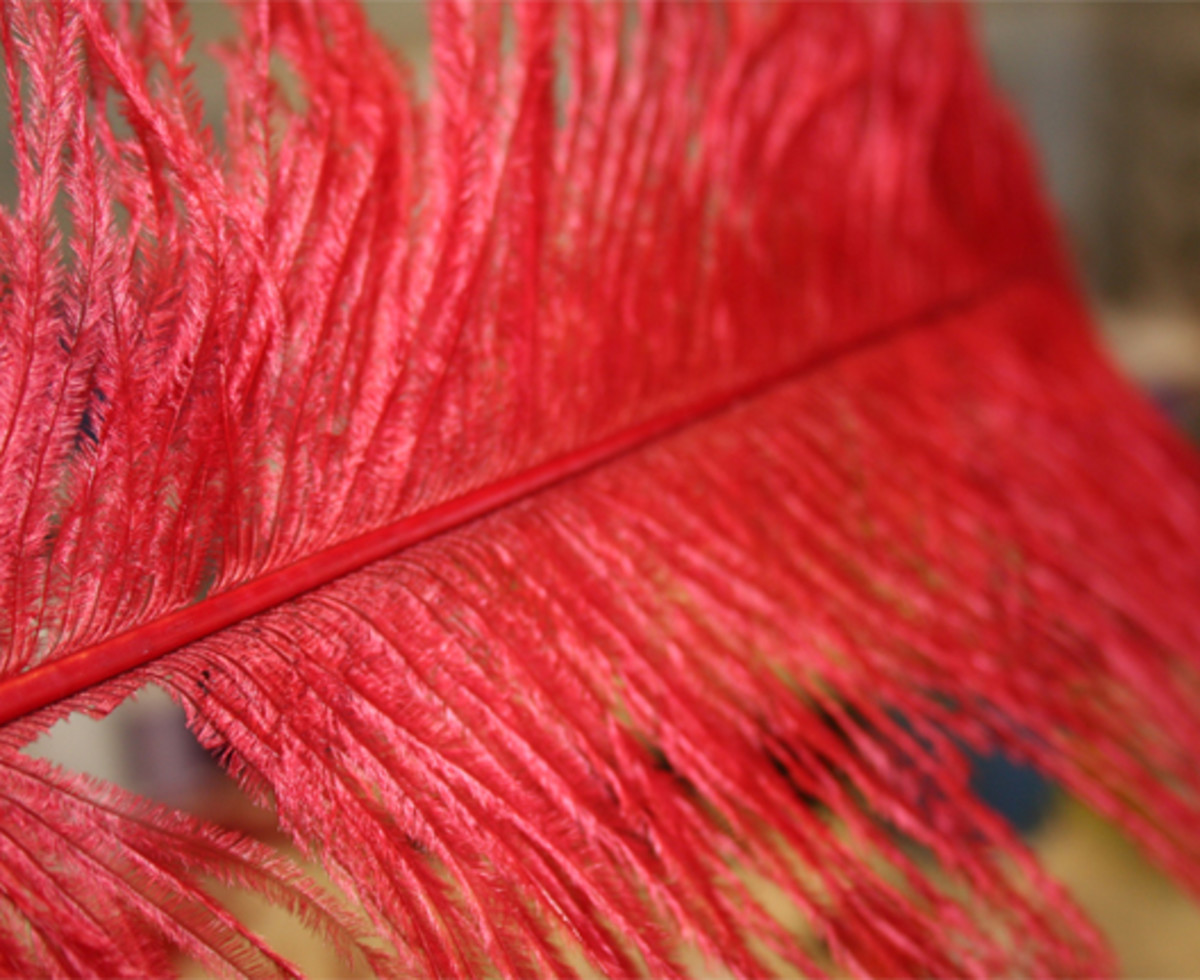 Shown here, I cut just a few red feathers loose from this beautiful red plume!