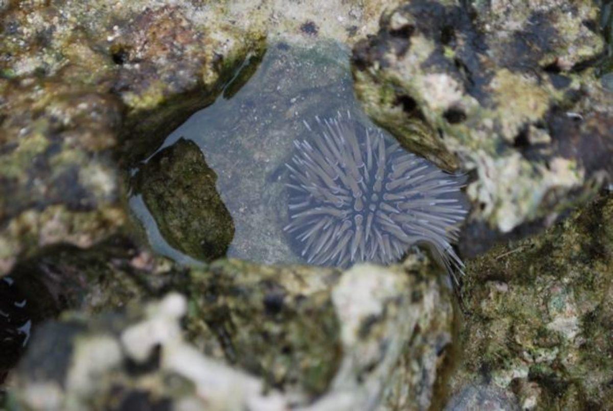 Sea anemone in Fiji