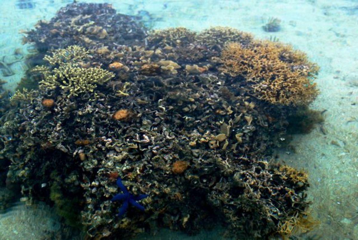 Delicate coral in Fiji
