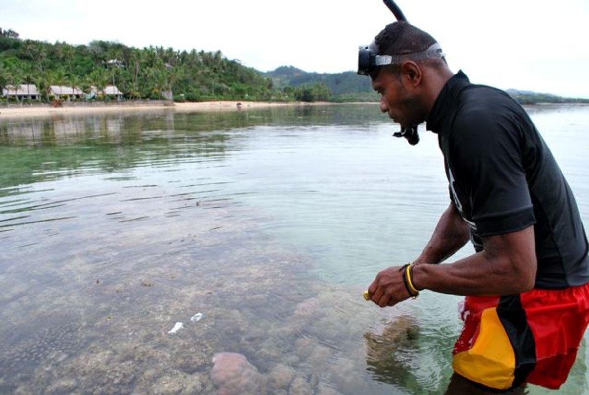 Planting coral in Fiji