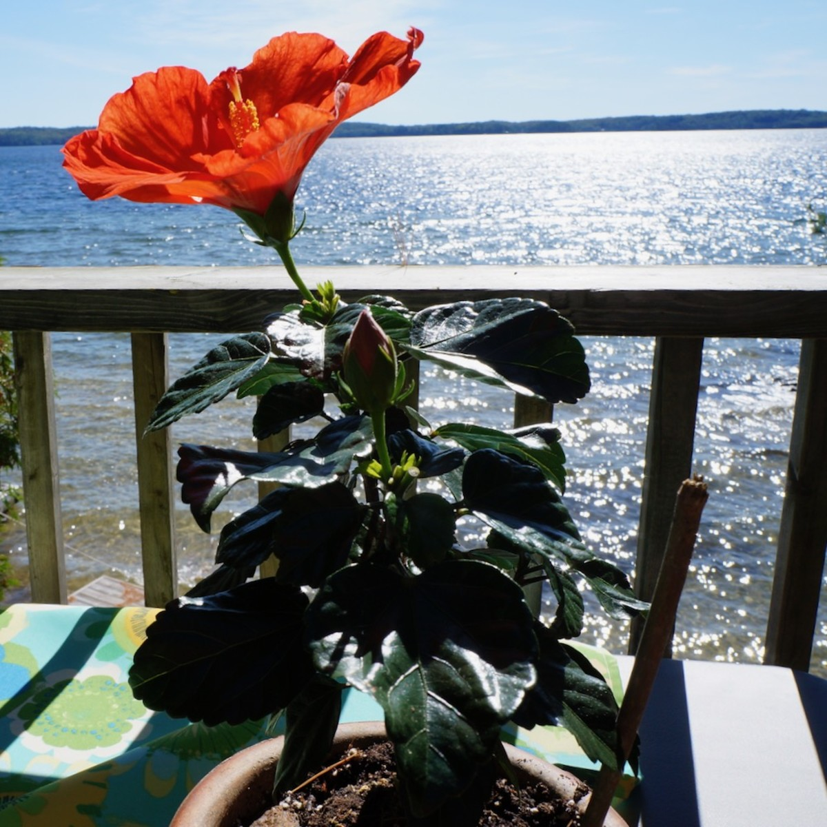 What Flowering Plants Do for Your Home