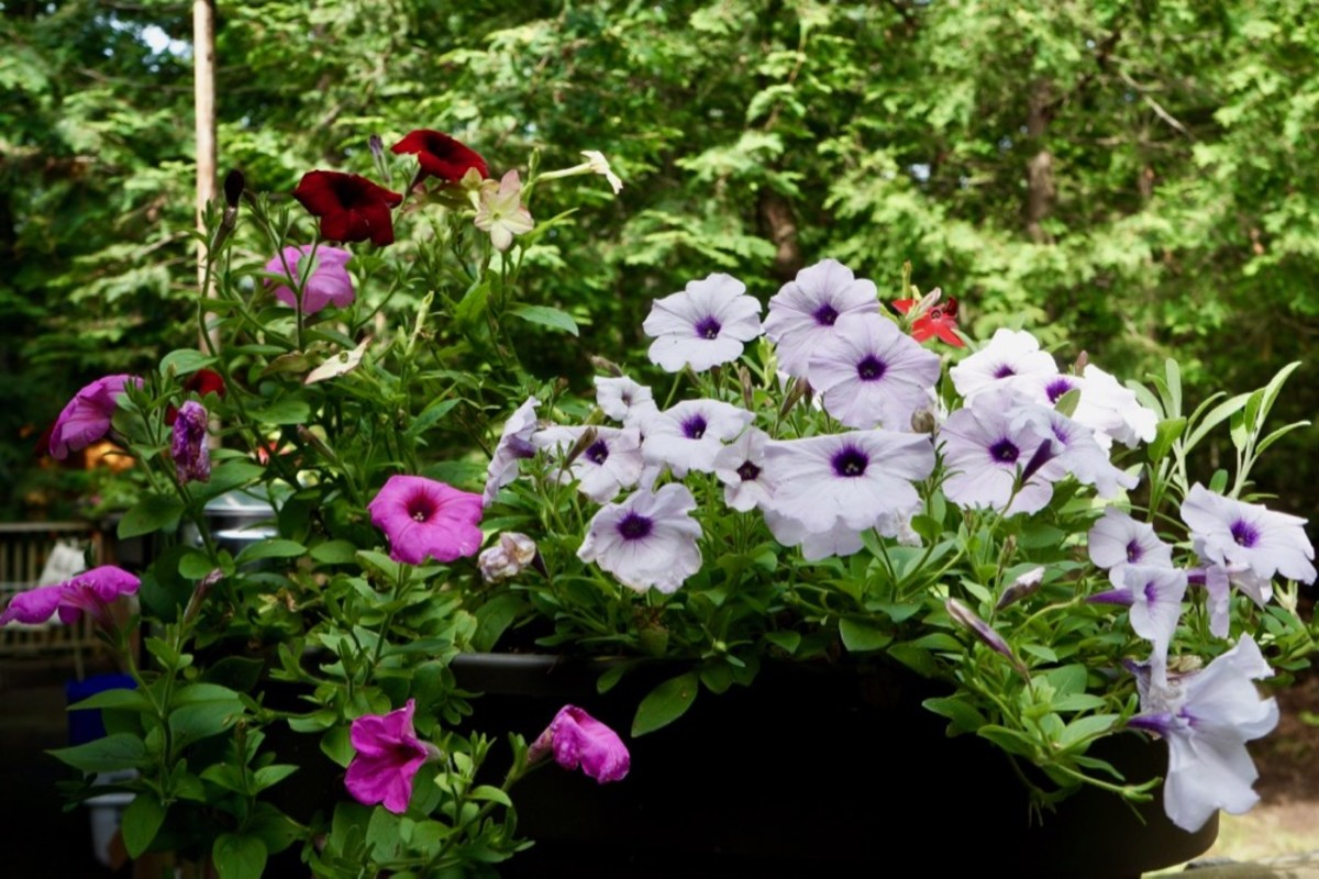 Easy to Grow Flowers