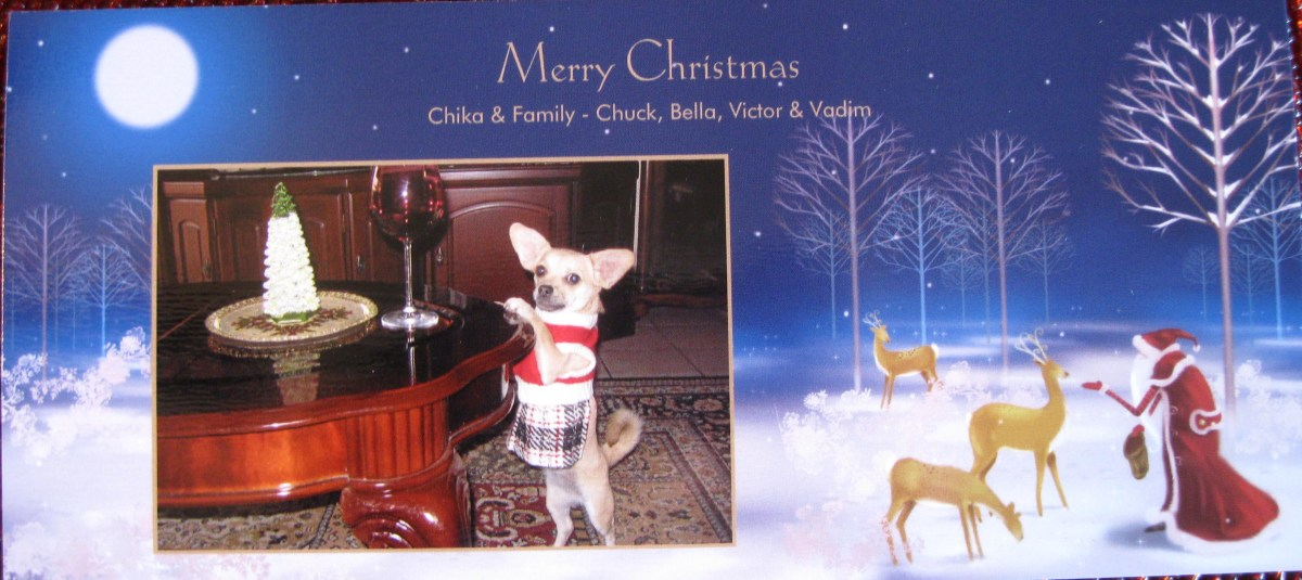 The Christmas card that our chihuahua, Chika, created.