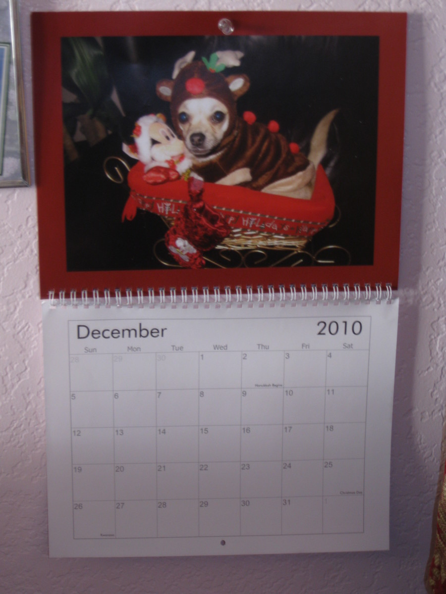 Chika' chihuahua calenders adorne the walls and desks in our home and the homes and offices of relatives.