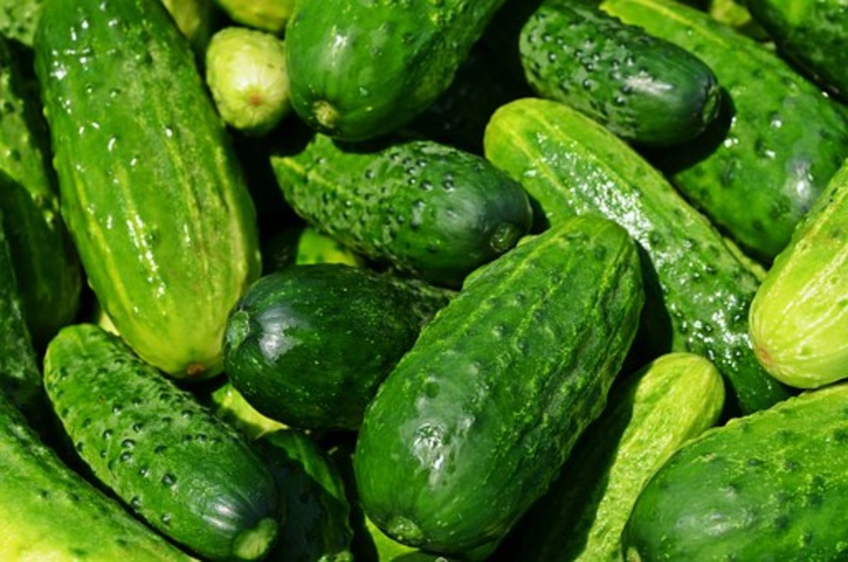 Health Benefits of Pickled Cucumber.