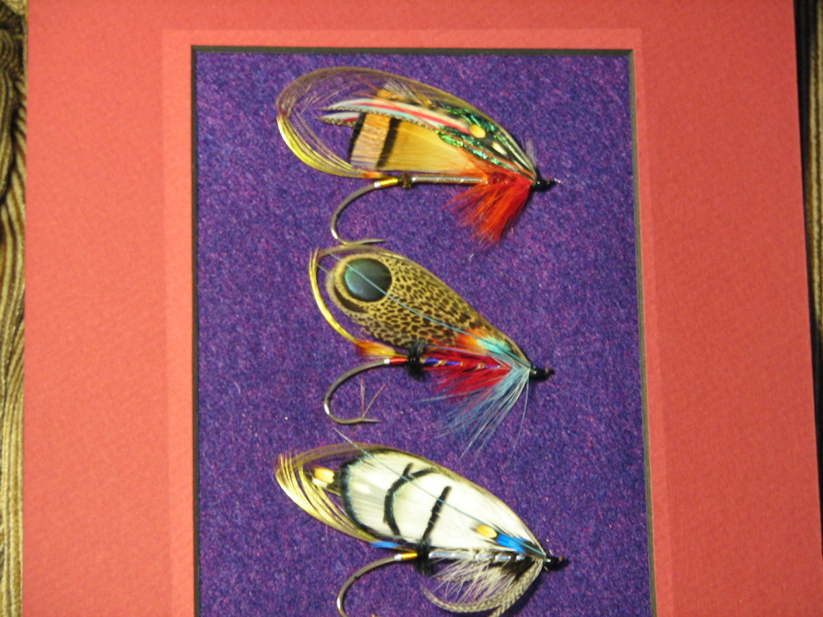 """The top fly is a """"Sir Herbert"""", the middle one is my own concoction called """"2001"""" and the bottom fly is a """"Lady Amherst"""". They're on gold plated hooks."""