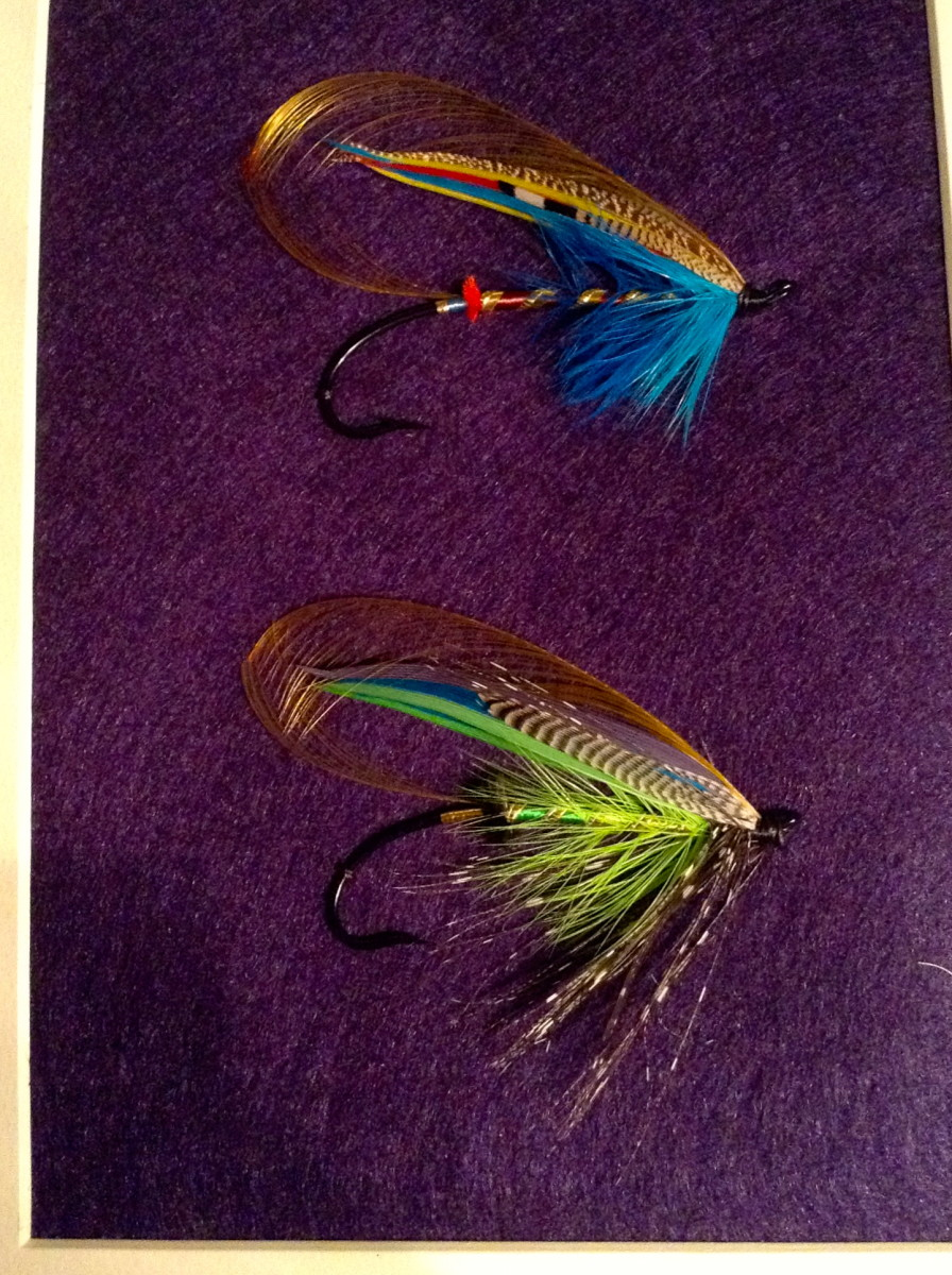 A couple Atlantic salmon fly feather wings I dressed few days ago and then framed.