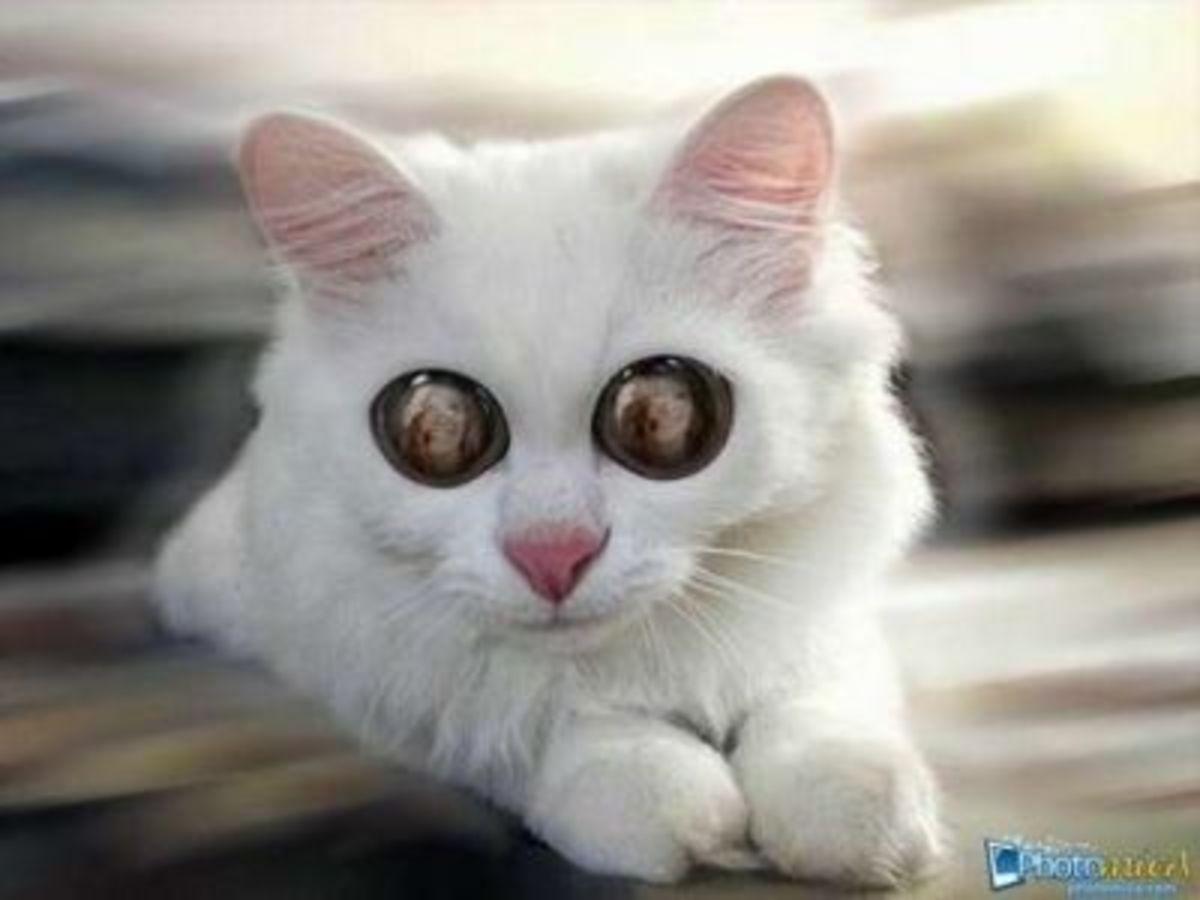 Photomica Cat's Eyes Photos