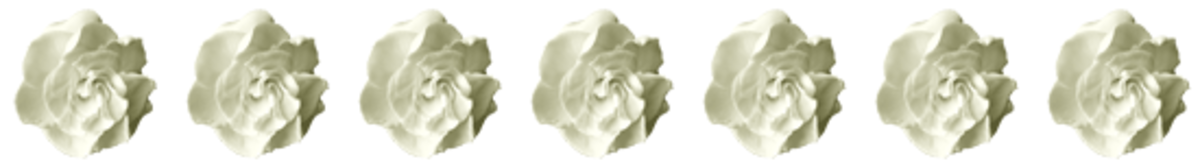 Gardenia Divider