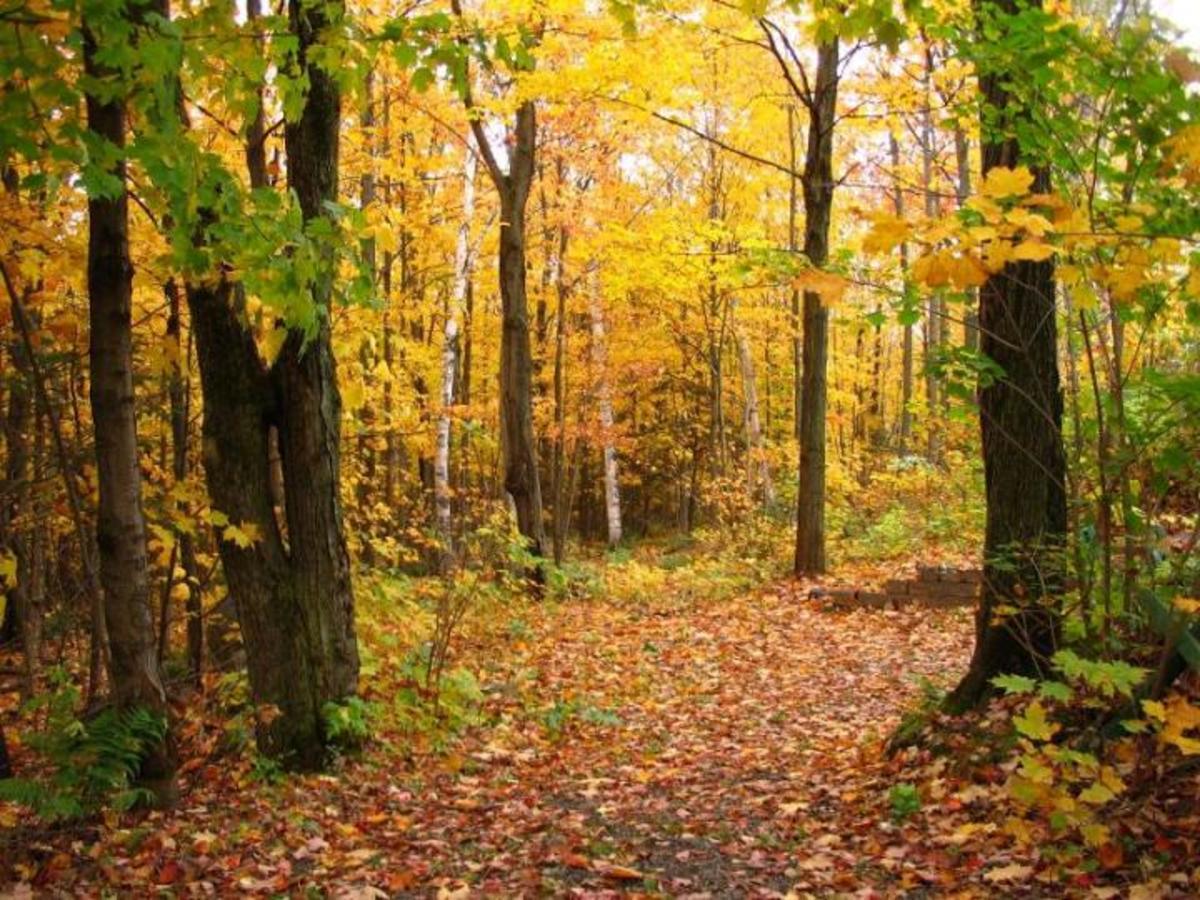 autumn-signs