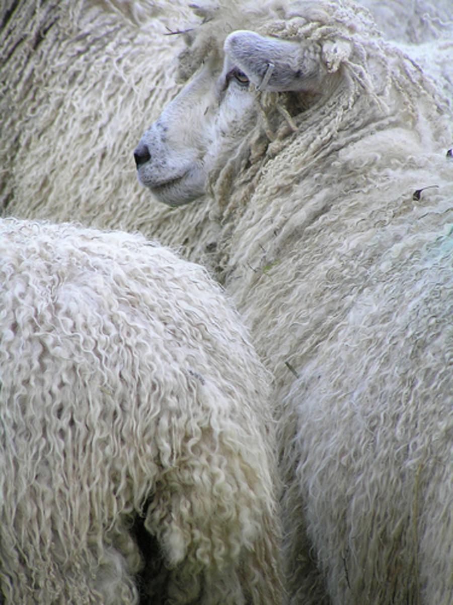 animals-with-dreadlocks