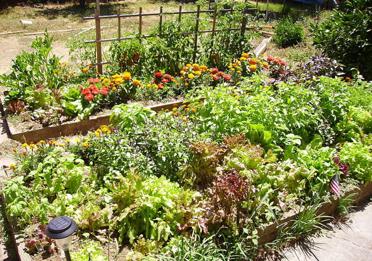 make-a-raised-garden-bed-using-old-wood-fence-panels
