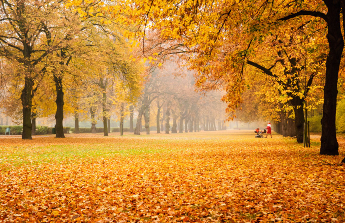 Autumn, or Fall, has leaves in beautiful colors.