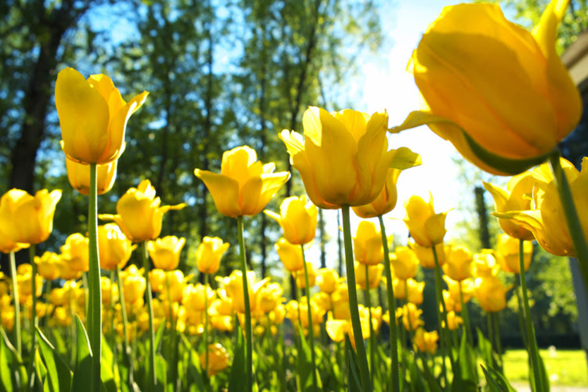 Oh, the beautiful of spring flowers that are plentiful only in the spring.