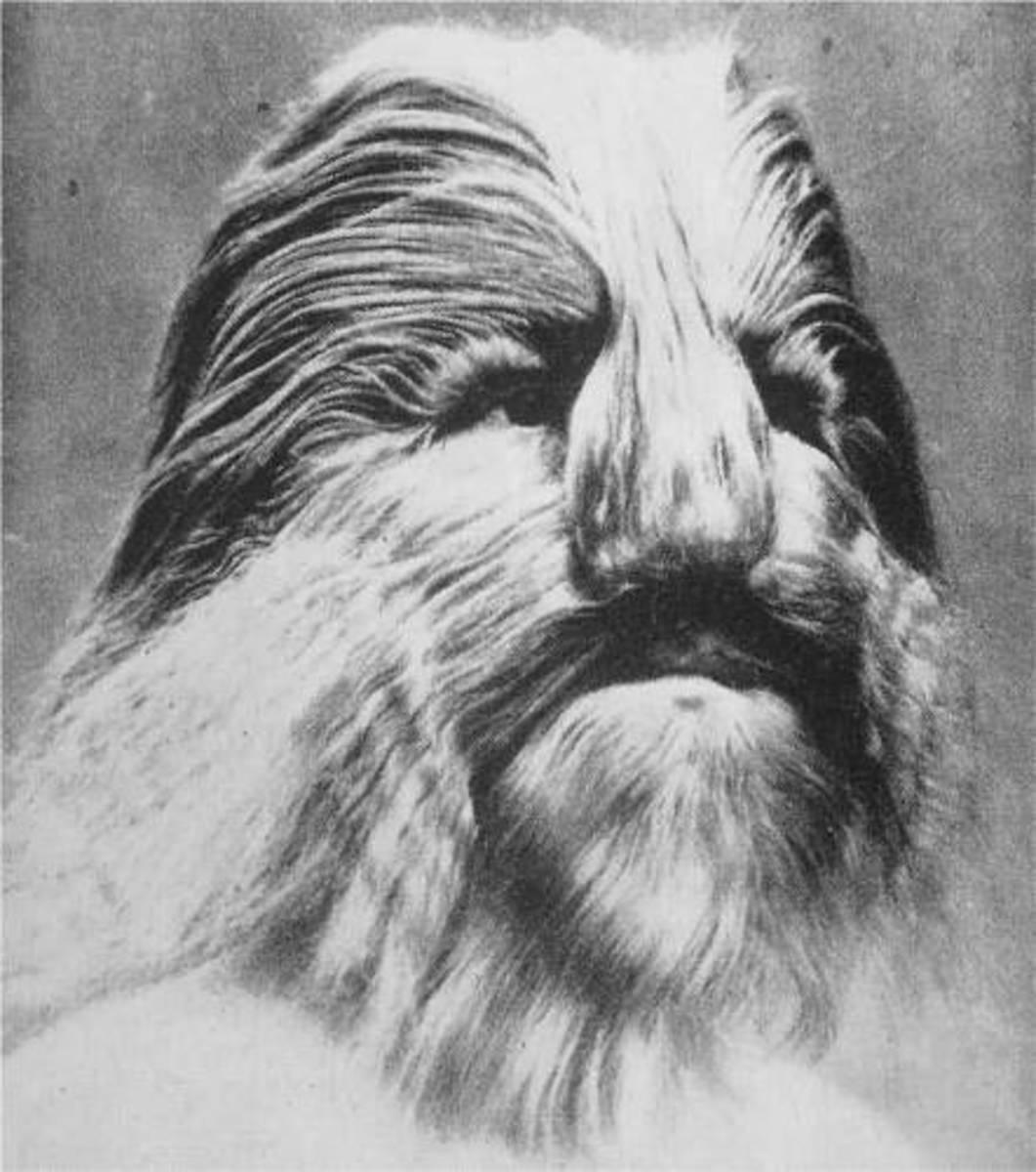 LIONEL THE LION FACED BOY