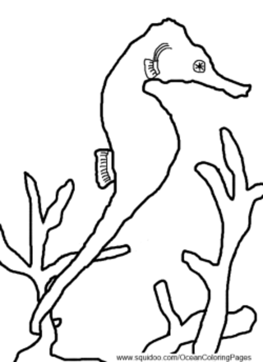 seahorse coloring pages - Realistic Seahorse Coloring Pages