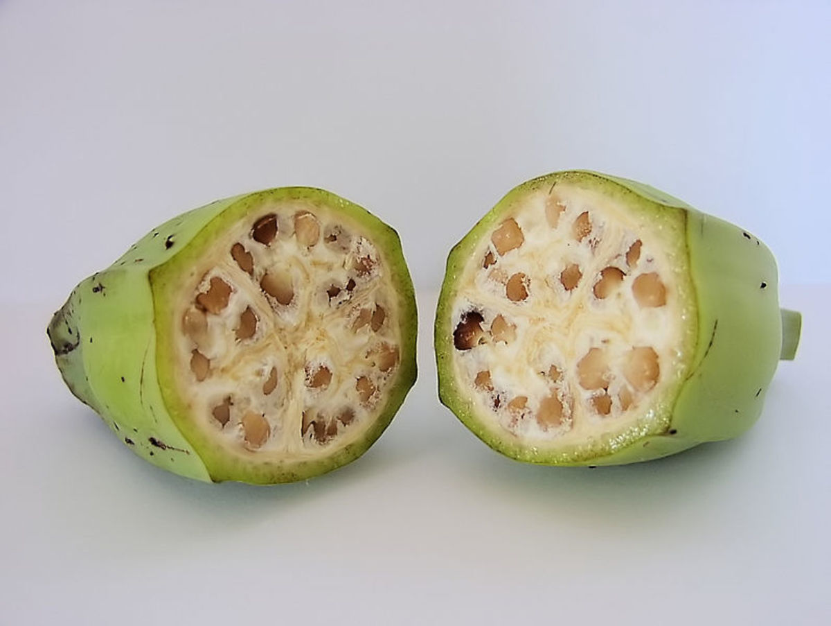 A wild banana, source: Wikipedia