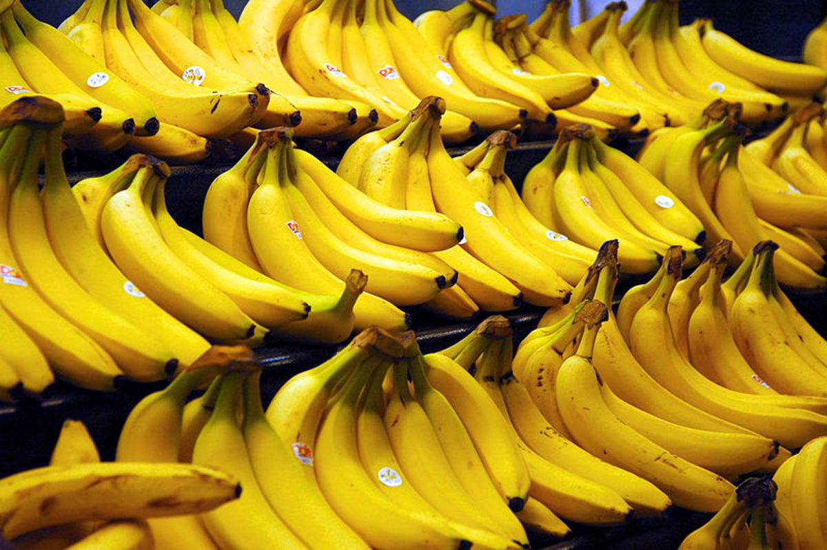 Cavendish bananas are the most commonly sold bananas in the world market. source: Wikipedia