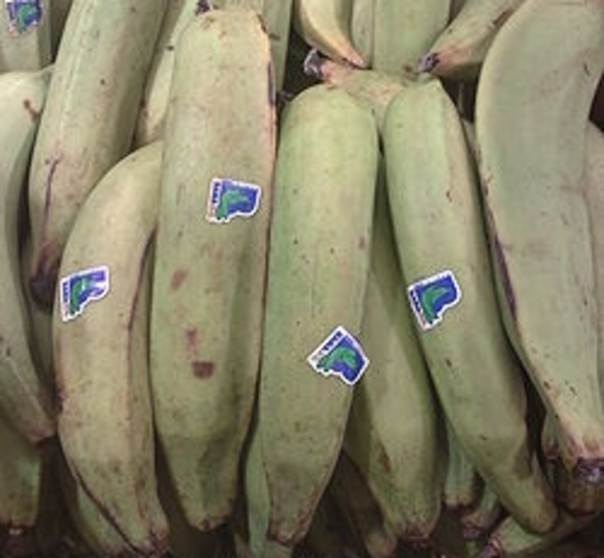 Plantains, source: Wikipedia