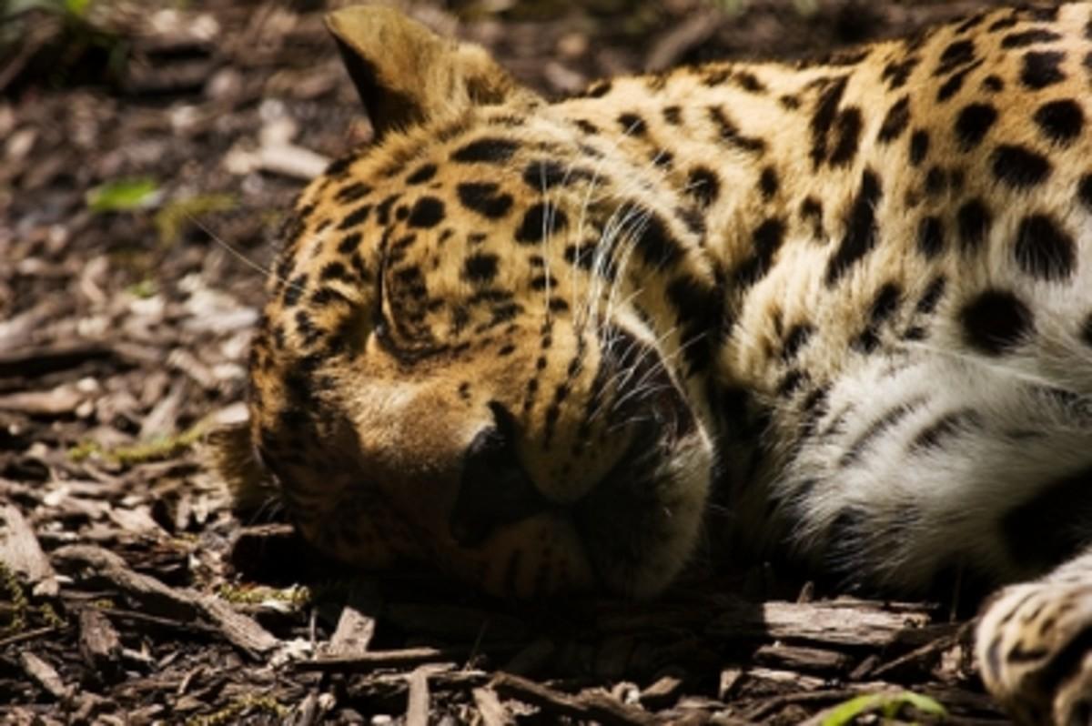 Sleeping Beauty by Blackburnphoto (CC BY 2.0)