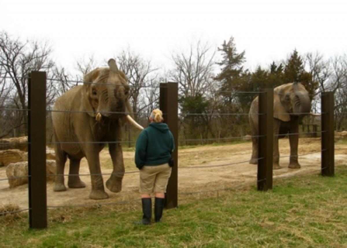 Elephants by Mike Sousa