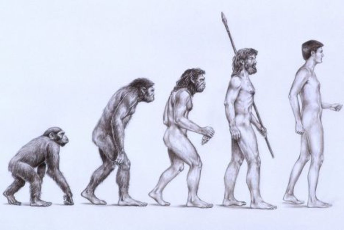 evidence-of-evolution-in-the-human-body