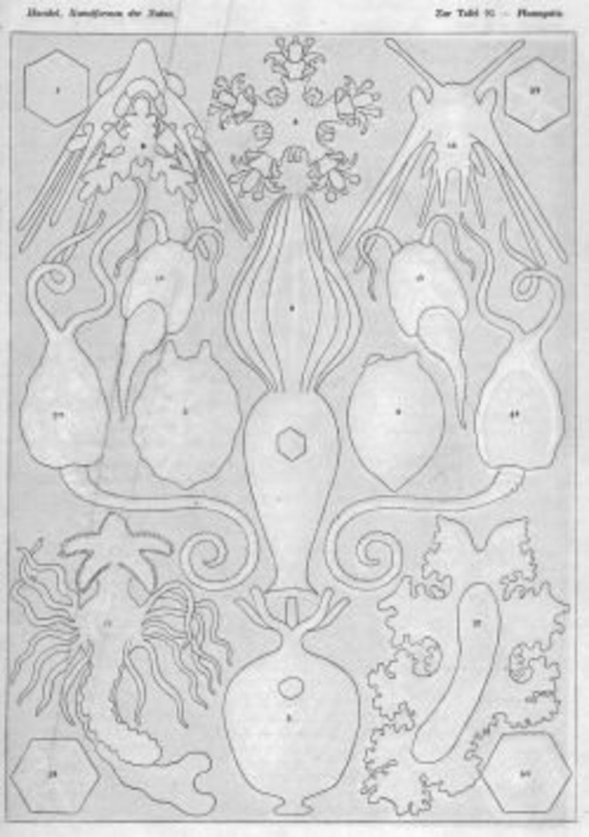 coloring-pages-by-ernst-haeckel