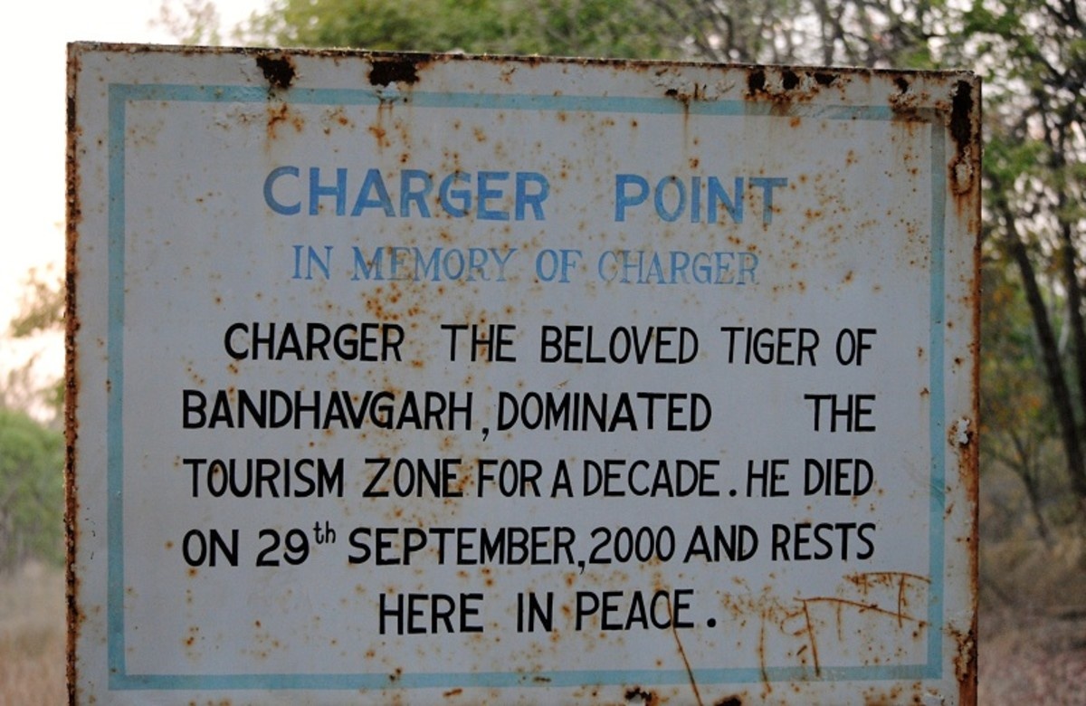 Top 5 Best Tiger Reserves in India