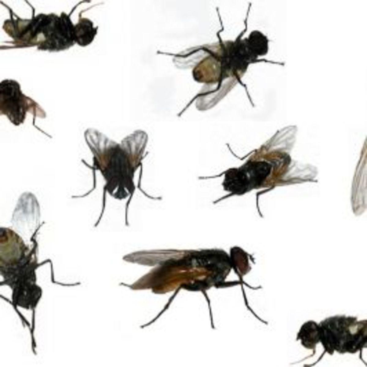 WA is full of flies !