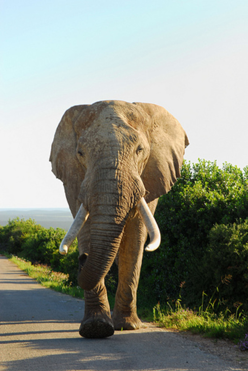 International Elephant Appreciation Day