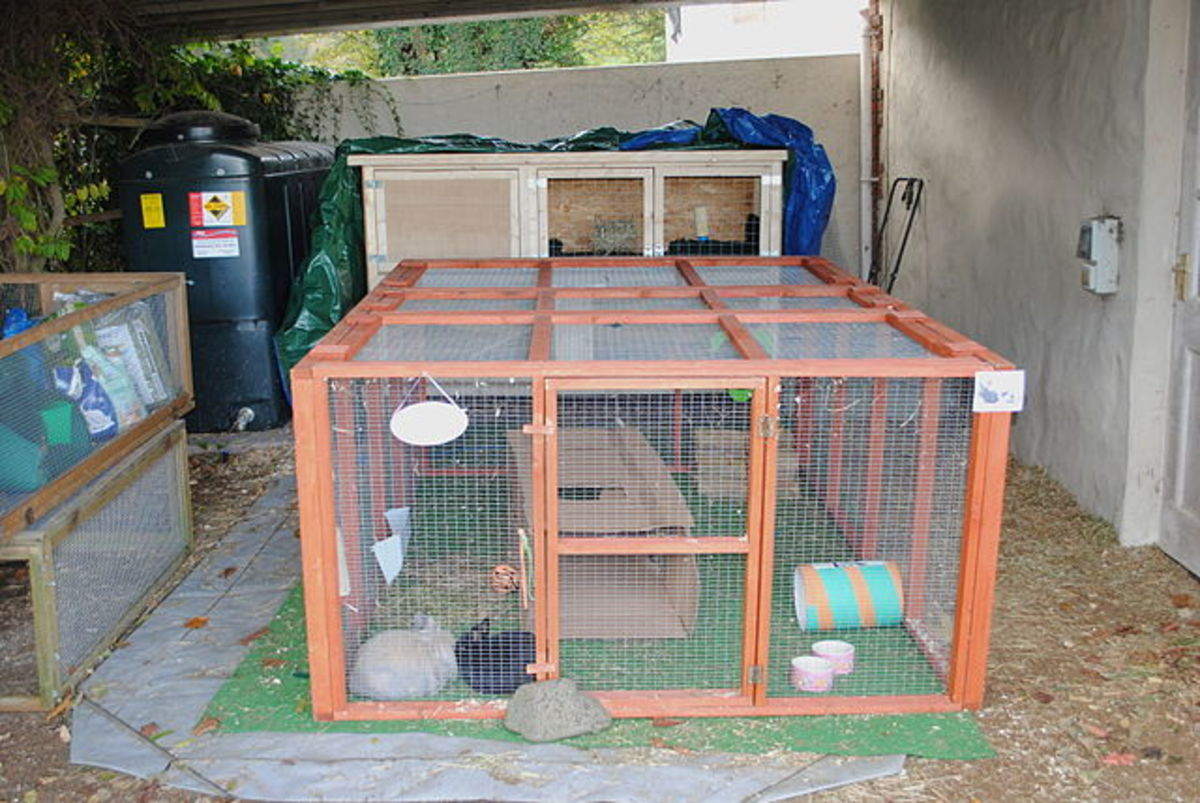 Large rabbit hutch for your bunny rabbit if they are kept outside.