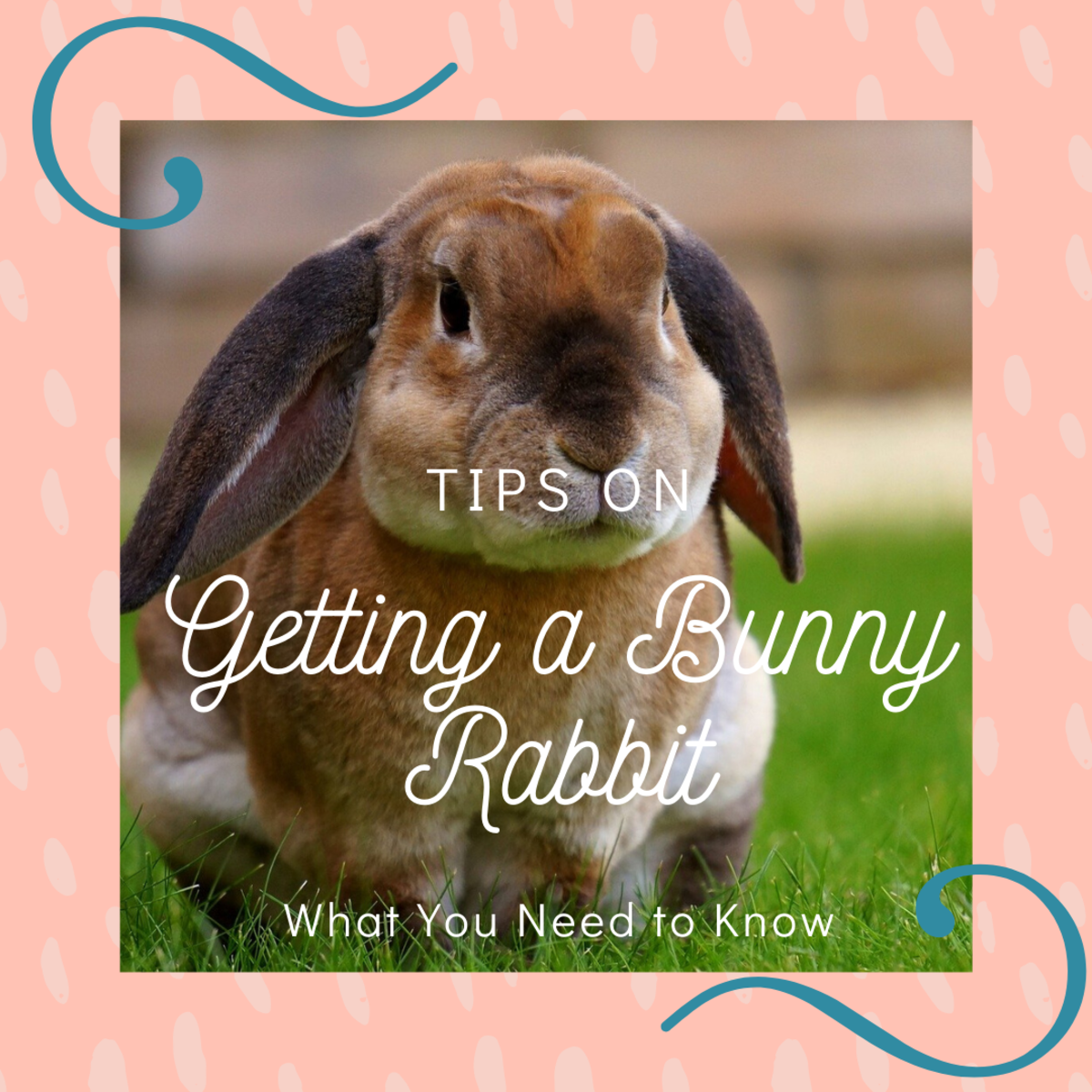 Before you decide to adopt a bunny rabbit, there are some things you need to know about them.