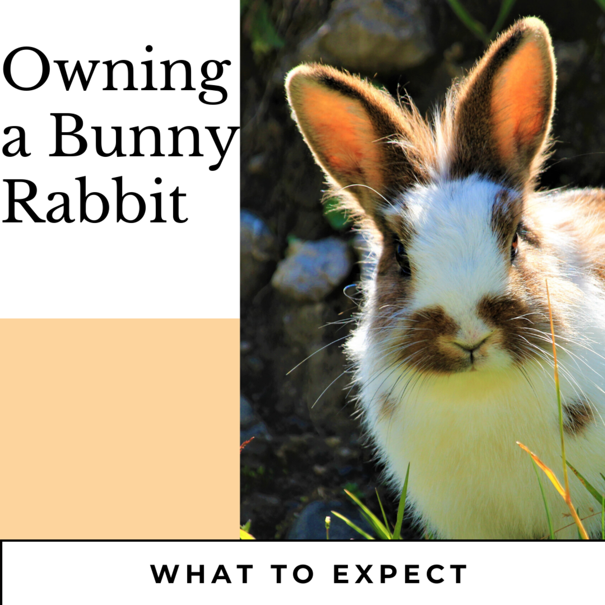 Owning a rabbit is so much different to a cat. Rabbit loves hanging out with you and are very affectionate.