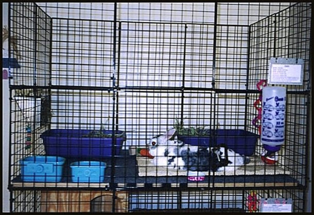 If you have decided to home your bunny rabbit inside, you can get indoor pens to house them.