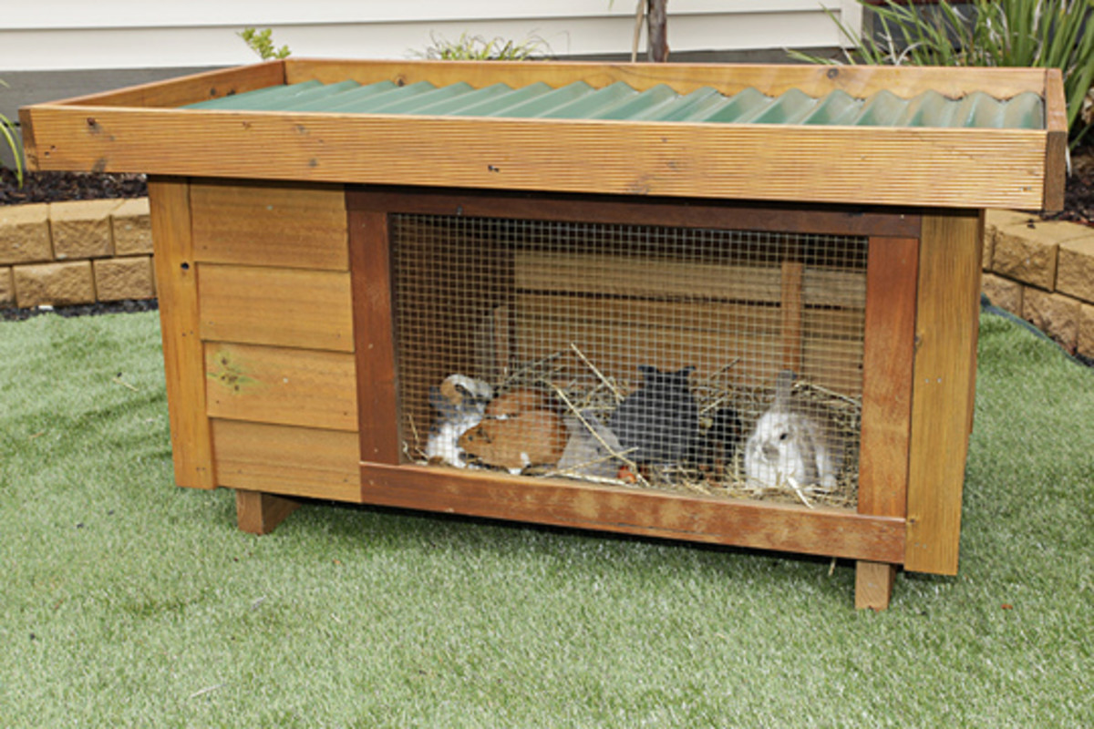 One story hutch for your rabbits if they live outside.